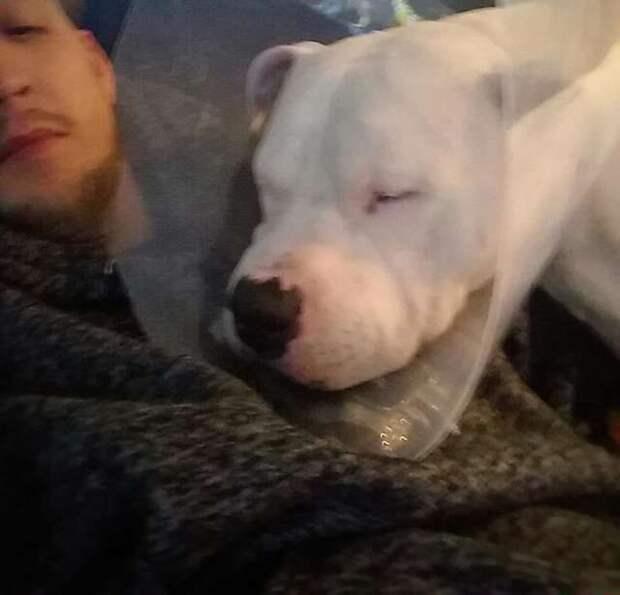 пес после операции