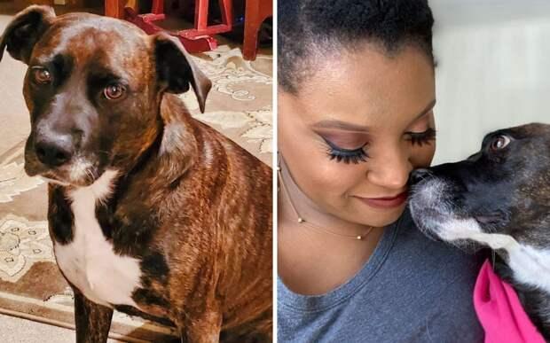 Женщина «удочерила» собаку, у которой никогда не было игрушек и лежанки