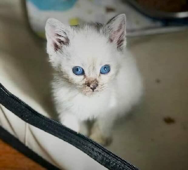 Этот котенок удивительно похож на Киару