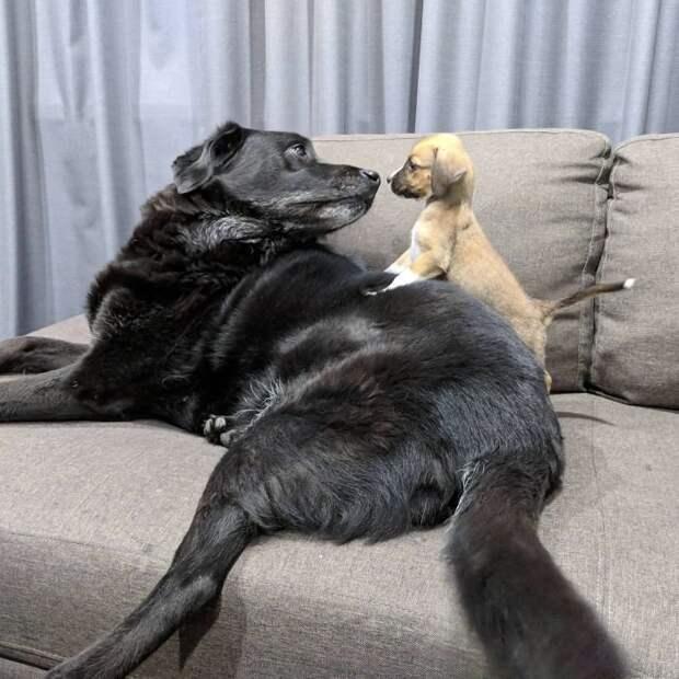 Старые и любимые домашние собаки