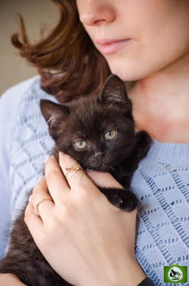 Кошки - Фонд Зоозащита