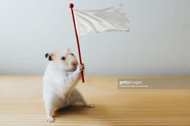 О побежавших крысах… Корабль дал течь?