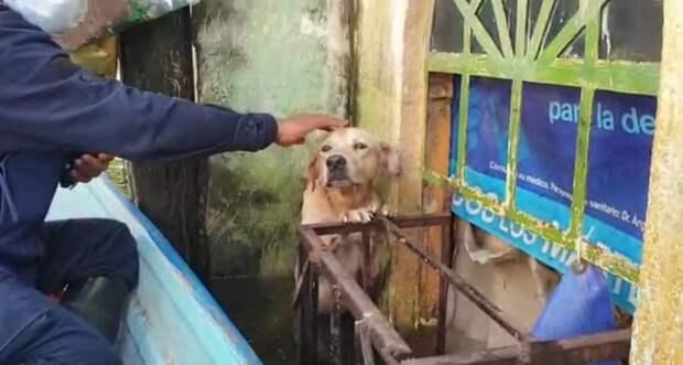 Люди спасли собаку, которая стояла на задних лапах в воде, чтобы не утонуть