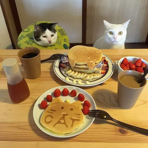 За клубнику спасибо, но жрать печеных котов? дегустация, еда, животные, кот, коты, позитив, реакция, юмор