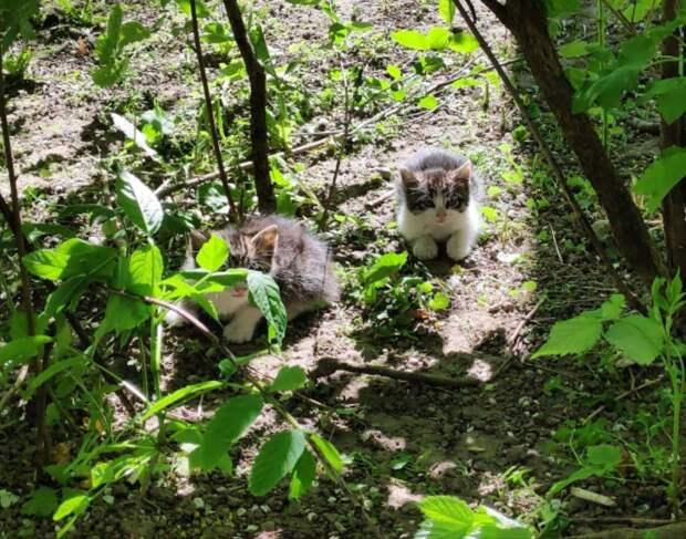 Эти малыши очень рискуют! Друзья, давайте вместе поможем этим котяткам избежать страшной участи!