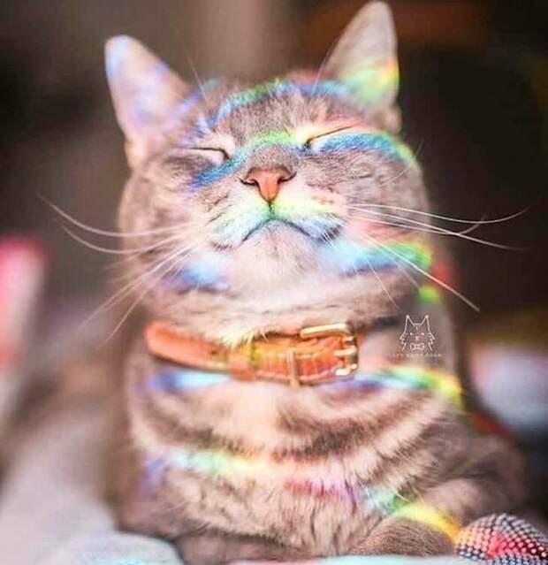 Котики, дарящие улыбку