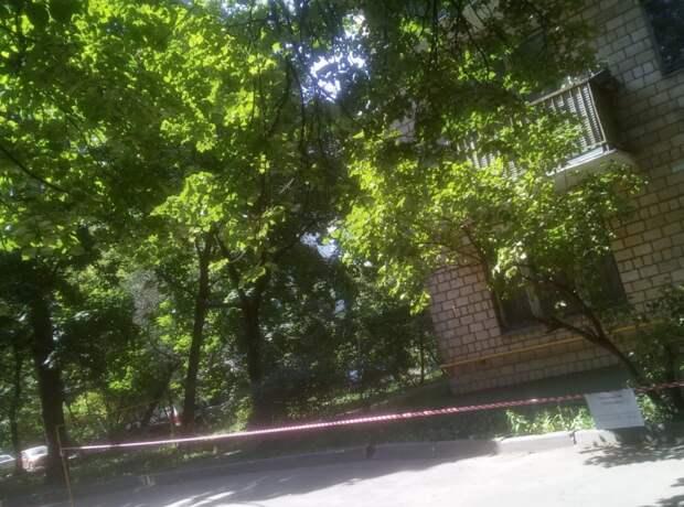 Департамент природопользования признал аварийным дерево в Хорошевке — управа