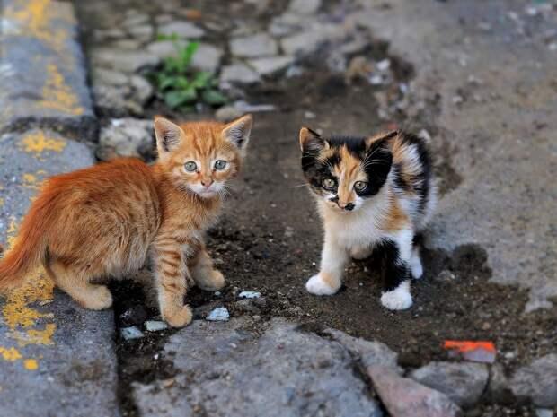 Источник фото Яндекс Картинки