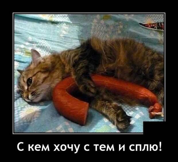Демотиватор про кота и колбасу