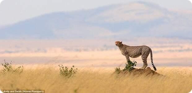 Дикая Африка от фотографов Энди и Сары Скиннер