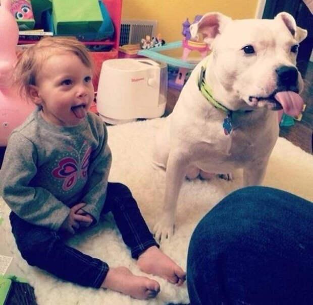 Забавные животные, которые подарят вам улыбку