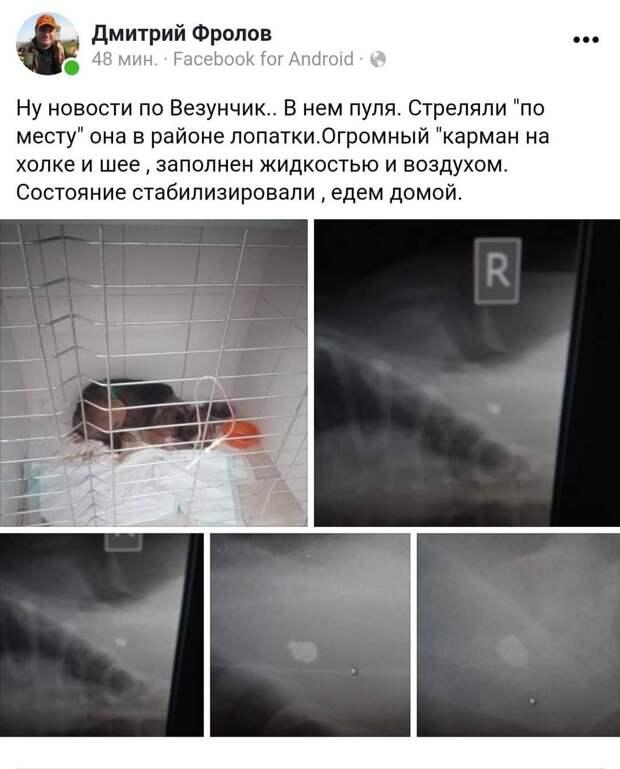 Пытались перерезать горло, стреляли, бросили умирать на заправке: В Симферополе нашли раненную собаку
