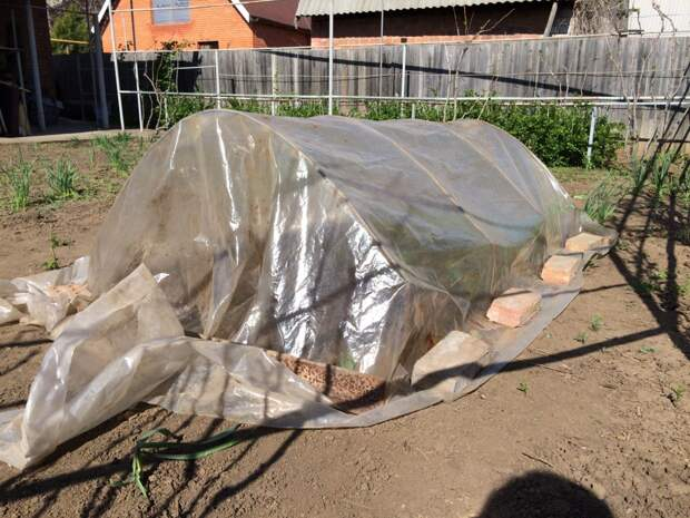 Особый секрет посадки огурцов в грунт