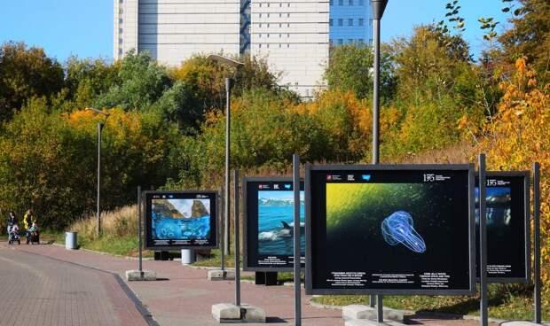 Выставка под открытым небом в парке «Северное Тушино» продлится до 15 ноября