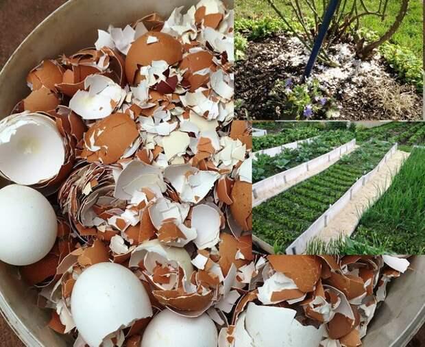 """Обязательно собираем яичную скорлупу для сада. Включаем особый """"режим сбора"""""""