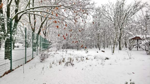 Снег в январе на Кубани: радость и проблемы
