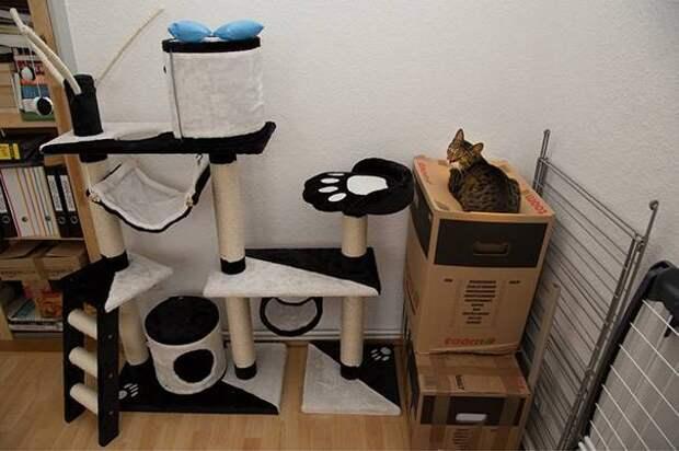 12 котов, которые разбавили серые будни своих хозяев