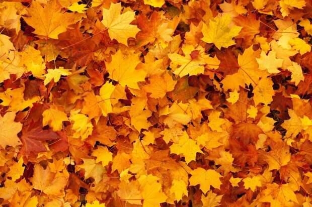Правильно ли коммунальщики утилизируют листья в вашем дворе? – новый опрос