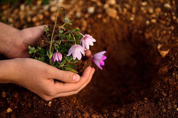 Что посадить на глинистой почве, чтобы хорошо росло