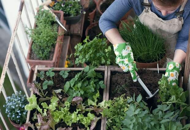 14 видов продуктов, которые вы можете вырастить из отходов домам