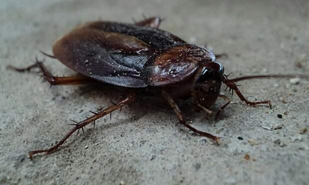 До конца марта дом на Ташкентской избавят от тараканов — Департамент ЖКХ