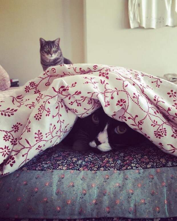 12. Отчаянно хочешь, чтобы животное спало в твоей постели, хотя и знаешь, что это бесполезно домашний питомец, животные, кот, прикол, юмор