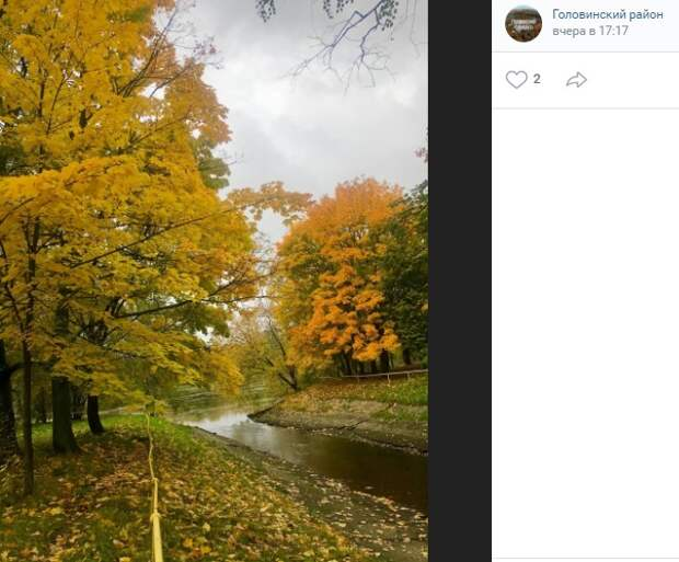Фото дня: желтеет «ковер» в парке у Головинских прудов