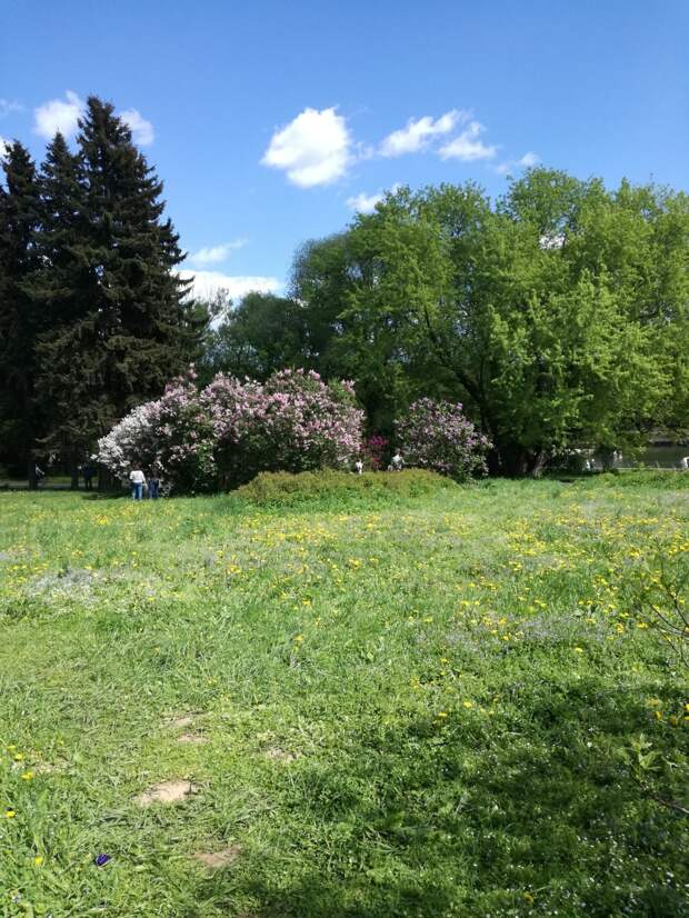 Продолжение прогулки по Ботаническому саду