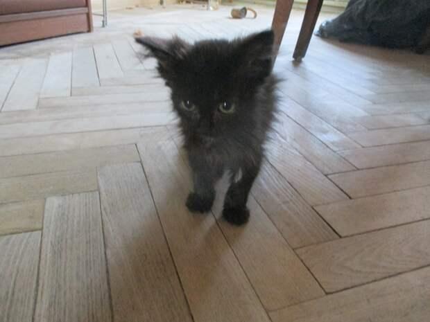 Испачканного цементом котенка покидали последние силы. Он тихо попискивал, зовя на помощь