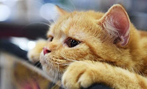 Мыша жизнь и смерть, коты, рассказ