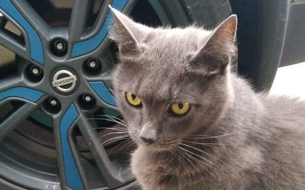 На улице Рогова брошенный кот поселился у подъезда