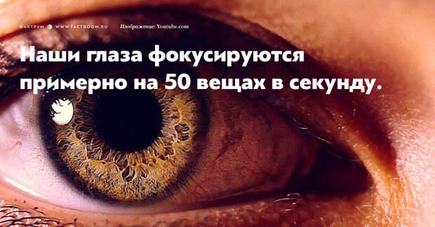 15 обалденных фактов о глазах, которых вы никогда не слышали