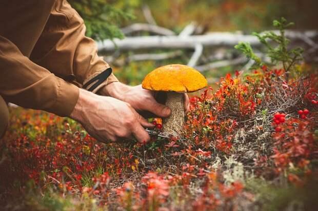 Что нужно знать, если вы собираетесь в лес за грибами
