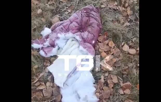 Стая бродячих собак покалечила ребенка в Красноярске