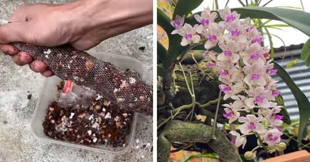 Волшебный мешочек удобрения на целый год. Орхидеи цветут, как на дрожжах