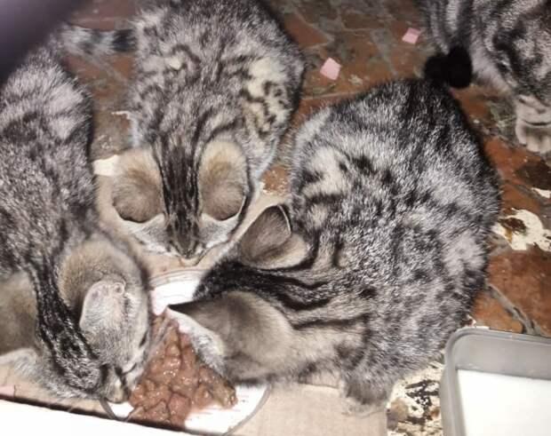 Есть люди, резко недовольные присутствием малышей... Откликнитесь, добрые люди! Приютите котят хоть на время!