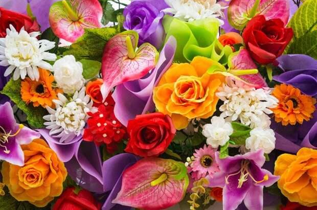 Что будет, если «накормить» цветы «Виагрой»?