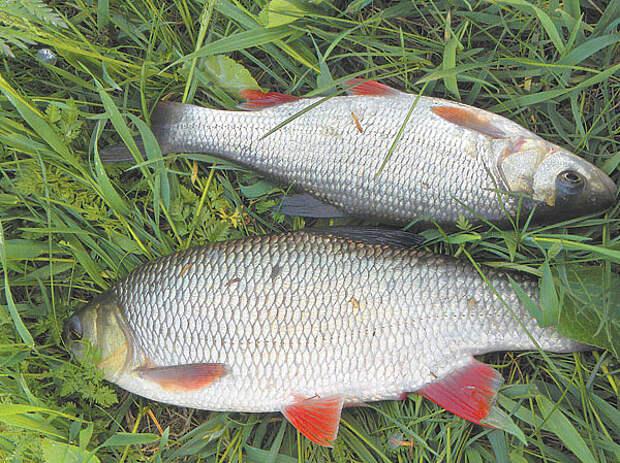 Рыбалка в пору летних дождей