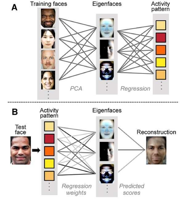 Нейросеть научилась реконструировать лица по воспоминаниям людей