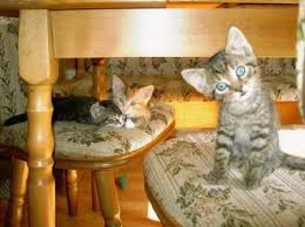 Коты, кошки и котята, милые зверята » uCrazy.ru - Источник ...