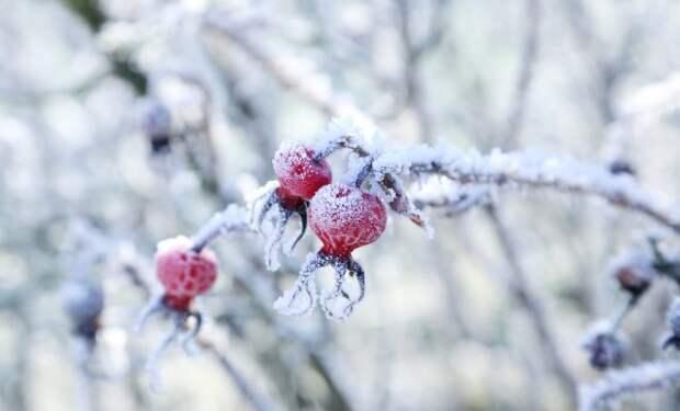 Заморозки в марте – как помочь растениям пережить 20-градусные морозы