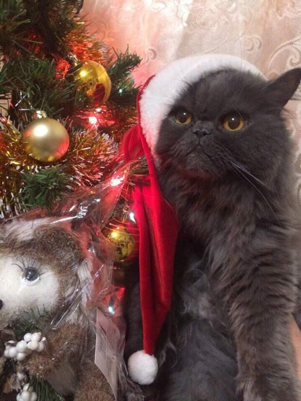 Шокированный кот забился в старое колесо и не двигался с места волонтер, истории спасения, кот, кошка, персидская кошка, персидский кот