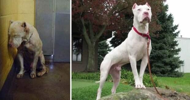 25 самых трогательных фото-историй, как брошенные собаки нашли новых любящих хозяев