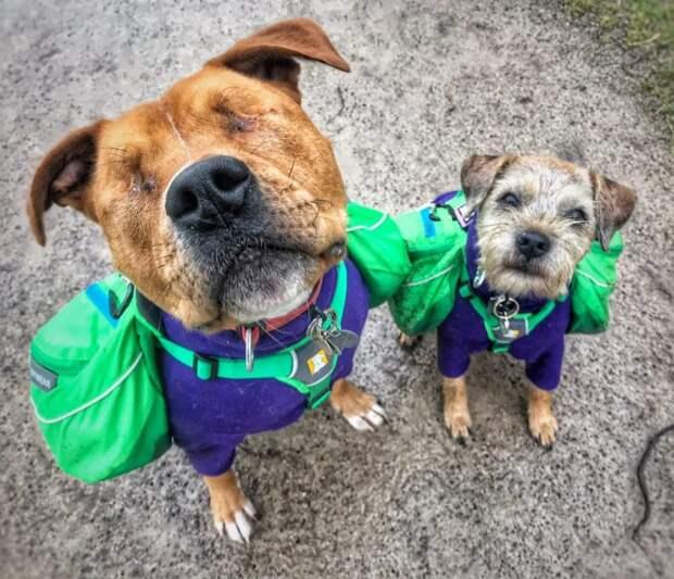 Слепой пес и его маленький поводырь: трогательная история дружбы видео, дружба животных, история, мило, собака, собаки, трогательно