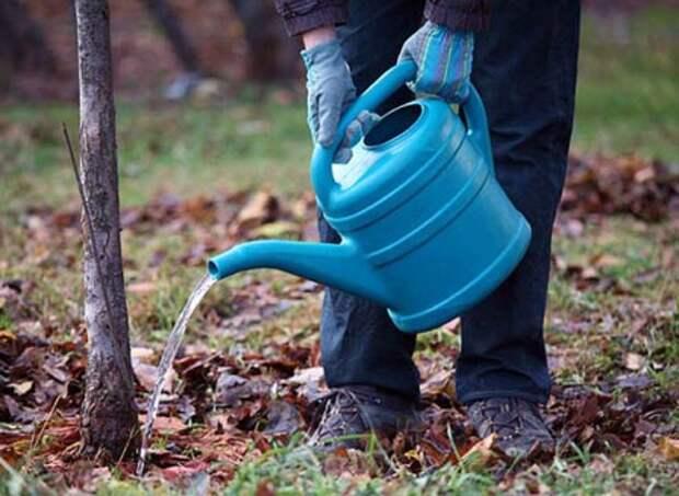 Какую можно посадить яблоню осенью