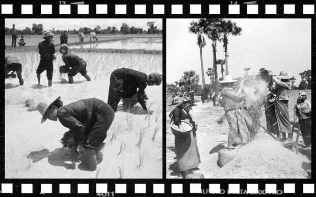 Камбоджийские крестьяне сажают рис и просеивают зерно. Коллаж © L!FE Фото: © РИА Новости / Саввичев