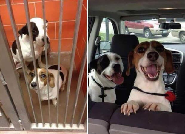 30 фото домашних животных до и после того, как их ″усыновили″