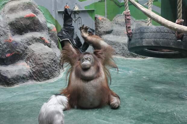 Ситуация с хлором не повлияла на животных зоопарка Удмуртии