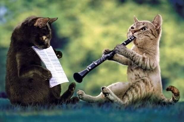 Животные любят и понимают музыку