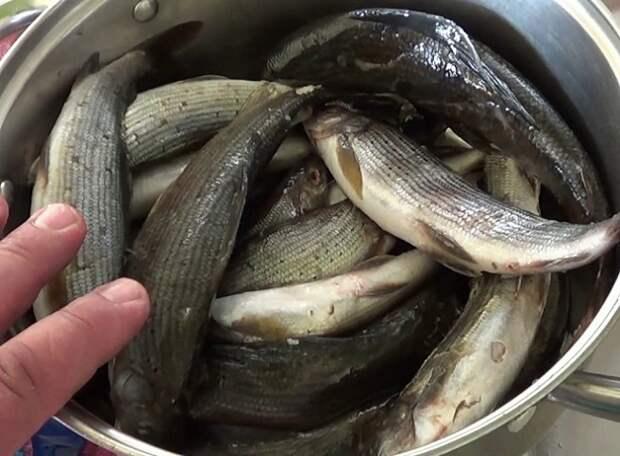 Как солят рыбу рыболовы Крайнего Севера